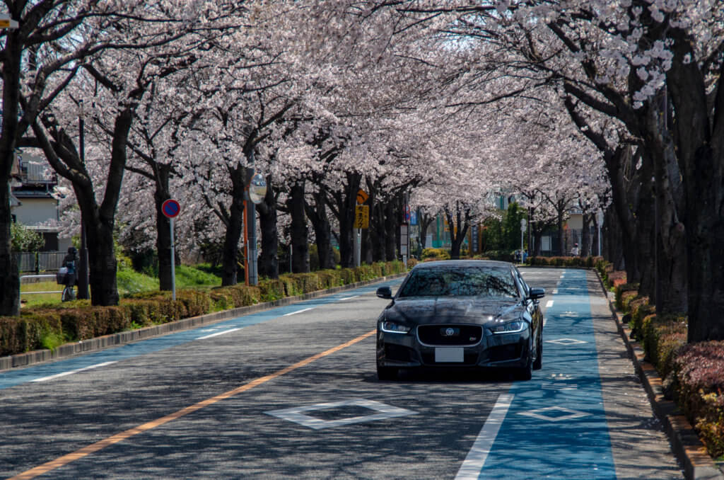 都心の桜を見るなら今日!